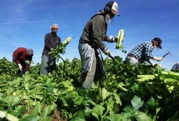 El 69% de indocumentados son trabajadores esenciales de la pandemia