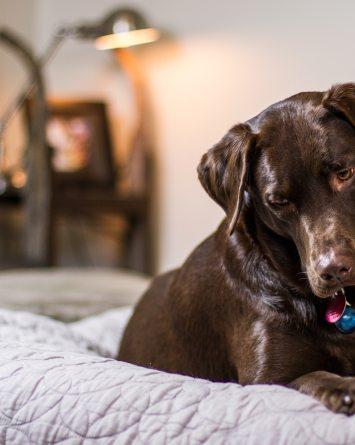 6 cosas para mantener a tu mascota activa durante la cuarentena