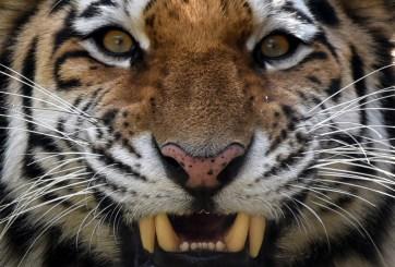 'Tiger King', el adictivo documental de Netflix del que todos hablan