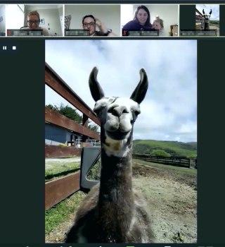 Esta granja te permite invitar a animales a tus videoconferencias