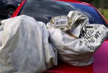 Familia encontró un millón de dólares en medio de una carretera