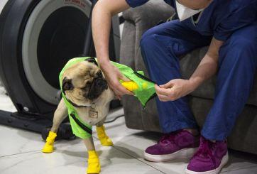 Harley, el perro que da apoyo emocional a personal médico en México