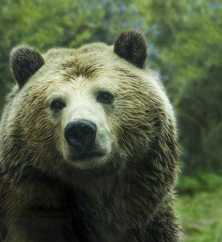 Un oso fue sentenciado a muerte tras atacar a excursionistas en Italia