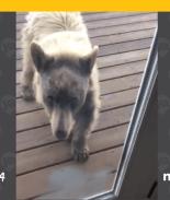 Video: Oso bebé trata de entrar a una casa en Boulder