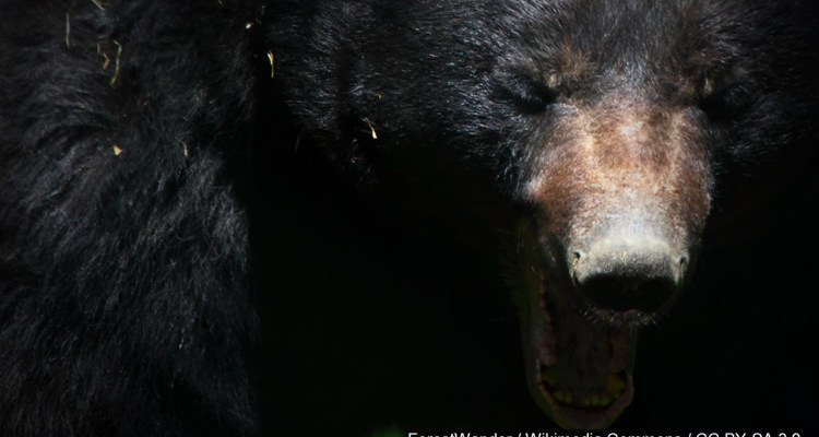 VIDEO: Oso acorraló a tres mujeres en parque ecológico de México