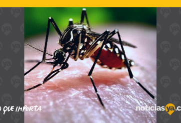 Mosquitos pueden portar enfermedades como Encefalitis de San Luis