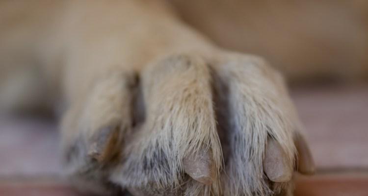 Muere el primer perro en dar positivo por COVID en Estados Unidos