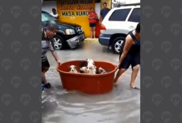 VIDEO: Familia perdió todo en huracán, pero rescataron a sus perritos