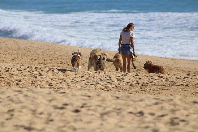 mujer en playa con perros