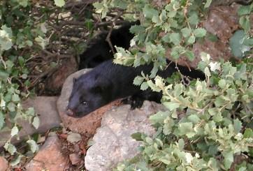 España ordena sacrificar casi 100 mil animales tras positivo a COVID-19