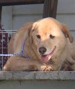 Día Mundial del Perro 2020: 5 historias caninas felices