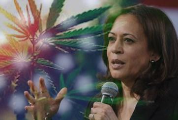 Marihuana, la carta verde de los demócratas a la Casa Blanca