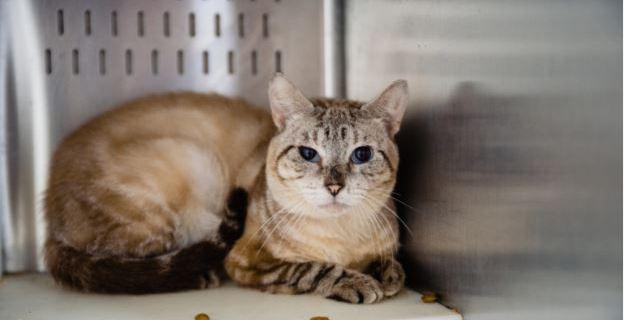 Rescatan 40 gatos de una vivienda en Orlando, buscan adoptantes