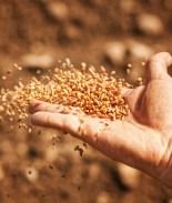 Plantó las misteriosas semillas de China y el resultado fue 'salvaje'