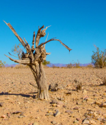 Se sigue agudizando el estado de sequía en Colorado