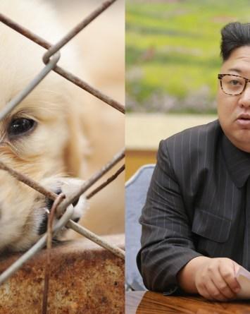 Corea del Norte decomisa perros de familias para usarlos como comida
