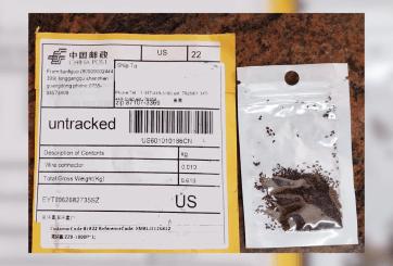 Identifican semillas extranjeras no solicitadas en Nuevo Mexico