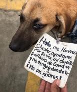 VIRAL: Perrito busca ser adoptado tras perder a su dueña por COVID