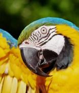 Aíslan a cinco loros de un zoo por insultar a los visitantes
