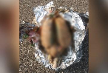 Hombre descubre un cerebro que arrojó el mar en una playa de Wisconsin