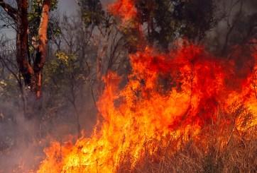 Bebé murió en incendio forestal y sus papás tienen quemaduras severas