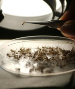Mosquito portador de extraño virus deja su primera víctima en Michigan