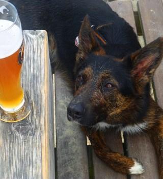 perro cerveza