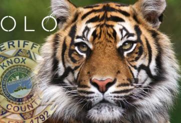 Un tigre anda suelto y las autoridades continúan la búsqueda masiva