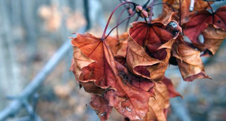 Mujer recibe multas de $600 por poste oxidado y arbusto sin hojas