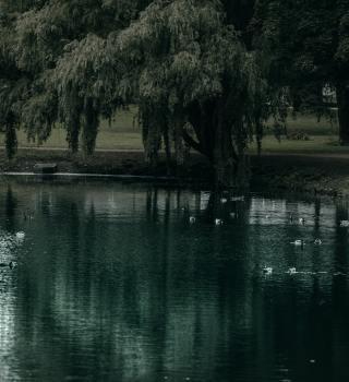 Reviven a niño de 2 años que se ahogó en un estanque en Florida