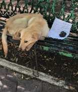 Abandonan a perrito en una banca y con emotiva nota