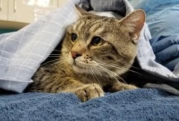FOTOS: 31 gatos rescatados tras abandonarlos en apartamento de Escondido