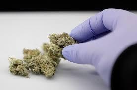 No arrestarán por posesión de menos de 2 onzas de marihuana en Pharr