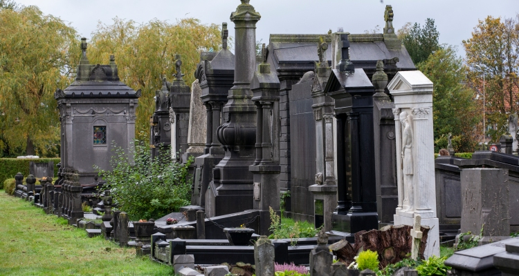 Cangrejos mutantes invadieron un cementerio y nadie sabe cómo llegaron