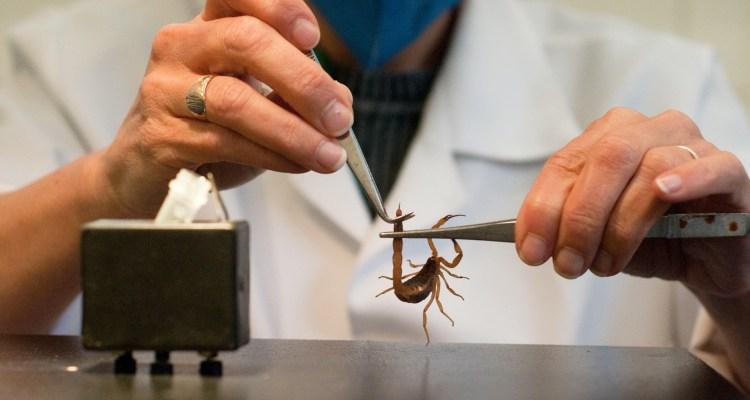 Crean toxina con 'veneno de escorpión' que inmoviliza al cáncer