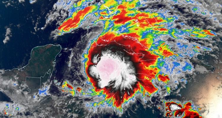 Cocodrilos invaden Florida con las inundaciones que dejó Eta