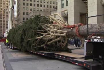 El árbol de Navidad del Centro Rockefeller llega a Nueva York
