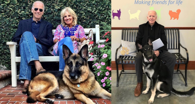Con Biden regresará la tradición de tener mascotas en la Casa Blanca