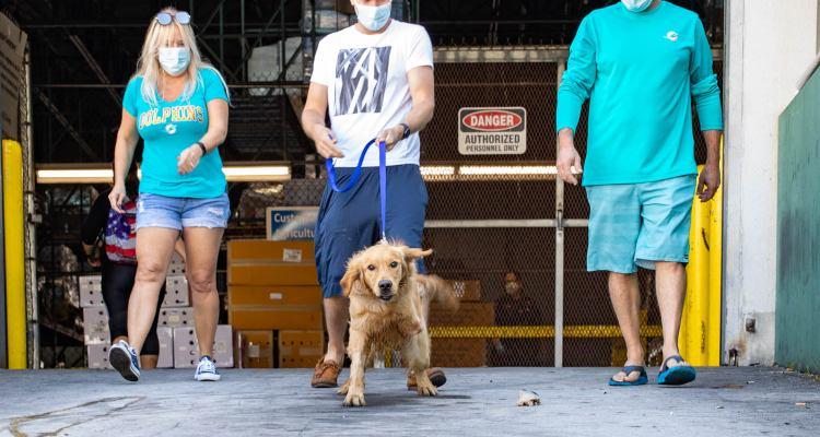 Rescatan 20 perros Golden Retriever de ser masacrados en China