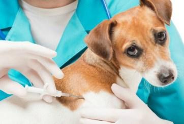 Ofrecen microchips gratis para mascotas en Harlingen