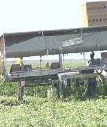 Trabajadores del campo ingresan en la fase 1b de vacunación