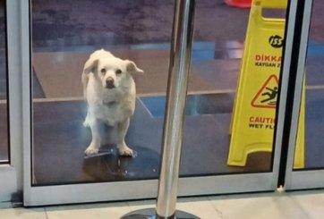 VIDEO: Perro fiel esperó seis días fuera del hospital a su dueño enfermo