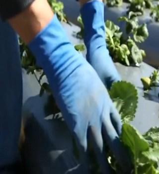 Nueva ley protege a trabajadores en California durante la pandemia