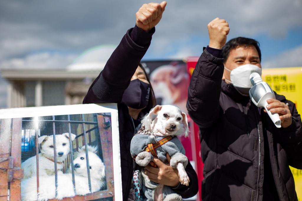 dog meat korea